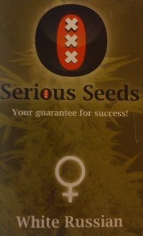 serious seeds ak47 review
